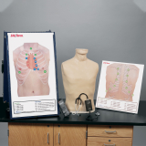 50-356 Life/form® Deluxe Auscultation Training Station