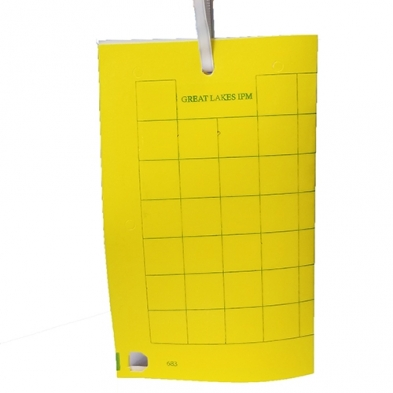 GL/GL-1080-25 YELLOW TRAP, UV HM, 25/CS