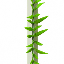 "Dalebrook Grass Divider 9.75""L White Base (12/Pack)"