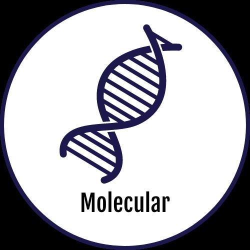 Molecular Assays