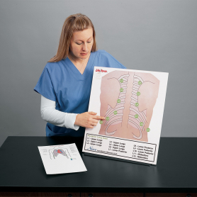 Life/form® Posterior Auscultation Practice Board