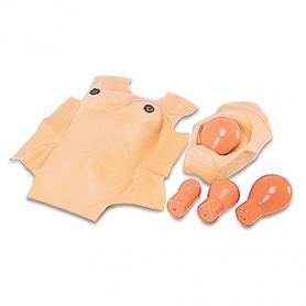 Koken Puerperal Skin (Uterus Recession Model Fixation Base)