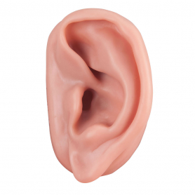 3B Scientific® Acupuncture Ear, Left