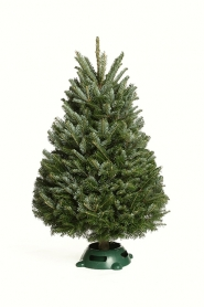 "Elf Tree & Stand - NO BOX 30"" - 48"" Tip"