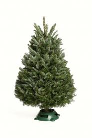 3' Elf Tree Plus Tree Care Kit