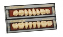 GNATHOSTAR A-D POSTERIOR TEETH