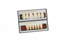 SR-VIVODENT-PE ANTERIOR TEETH LOWER
