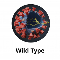 SARS-CoV-2 full-length Trimeric Spike Protein
