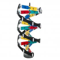 Model, DNA Kit
